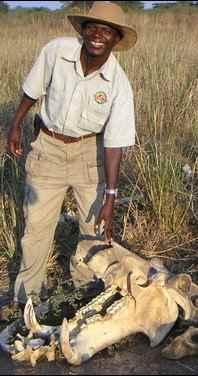 Chachacha guide showing hippo skeleton - Zambia safari