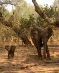 Elephant and her calf