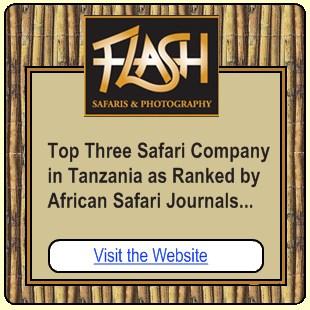 Flash Safaris