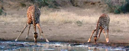 Self Drive South Africa Safari Review: We Saw More Than We