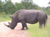 Rhino road crossing