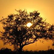 Kruger sunrise