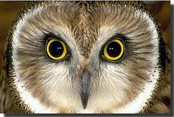 owl-picture.jpg