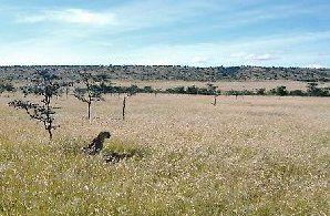 Cheetah over kill