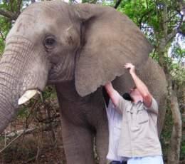 Kasper the elephant at The Elephant Sanctuary, Hazyview