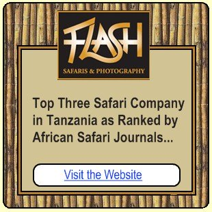 Flash Safaris
