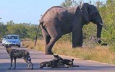 Guide your own safari