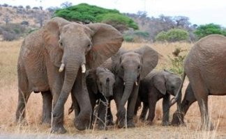 Elephants - ©Nancy Andre