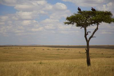 The beautiful Mara landscape.. the photo doesn't do even half the justice.
