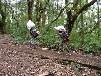 Porters on the Kili trail