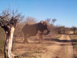 Elephant dust bath - Anne Paterson