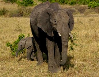 Elephants - Samantha Fenn
