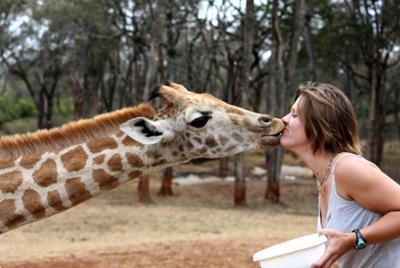 Giraffe Manor, Nairobi Kenya - ©Katie Osborn