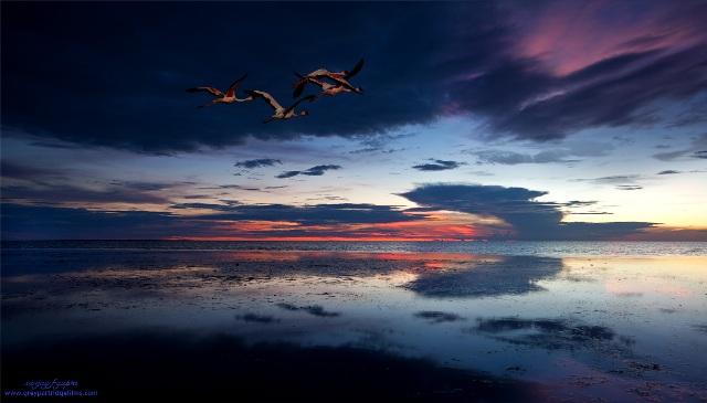 Flamingo Sunset - Sanjay Gupta