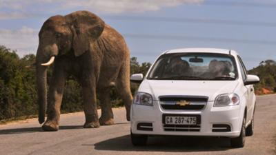Getting close to elephants at Addo