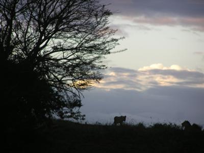 Lions in Hluhluwe-Imfolozi