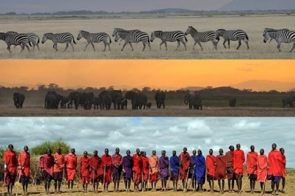 Zebras, Elephants and the Masaai people of Kenya