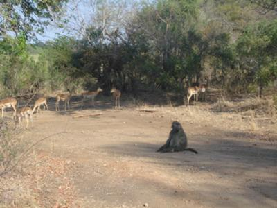 Typical scene in Kruger