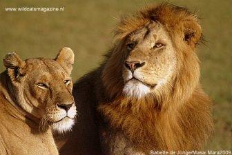 Lions Babette