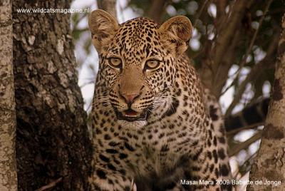 Leopard - ©Babette de Jonge