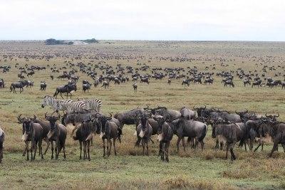 Magnificent migration