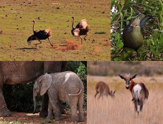 More Addo animals