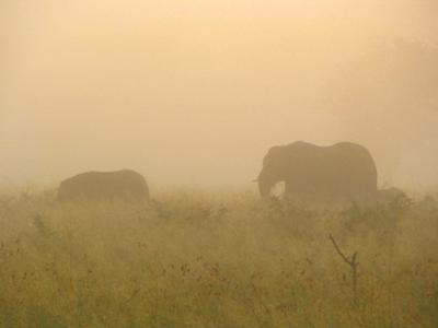 Elephants    © www.african-safari-journals.com