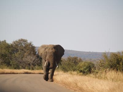At Kruger
