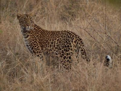 At Sabi Sands