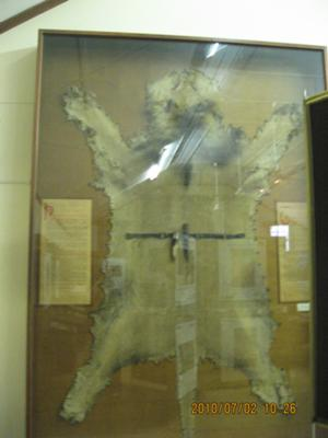 Display in the museum, Skukuza - the story of Harry Wolhuter