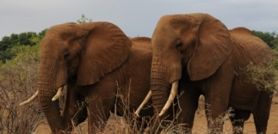 Elephants in Samburu - Mike Garratt