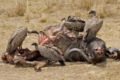 Vultures - Ted Kletnick