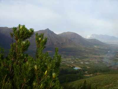 Western Cape and proteas