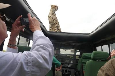 Celebrity Cheetah