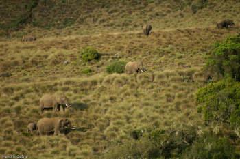 Elephants in Aberdare - ©Hendrik Gessner