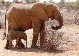 Elephants - Sue Sinkinson