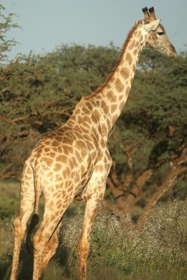 Photo © www.african-safari-journals.com
