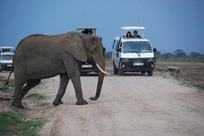 Viewing an elephant