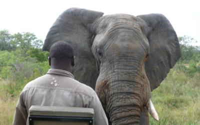 This elephant came very close to the vehicle