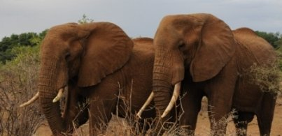 Elephants in Samburu - Mike Garratt