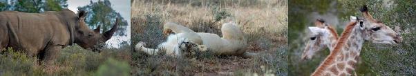Shamwari wildlife - photos by Laura K