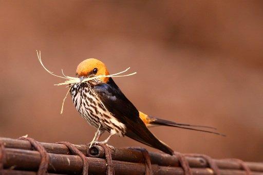 Swallow - Larry Kay