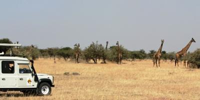 Giraffes in Enashiva Game Reserve