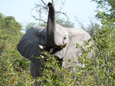 Getting close to elephants